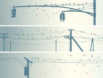 Insegne orizzontali degli uccelli dello stormo sulle linee elettriche della città. Fotografia Stock Libera da Diritti