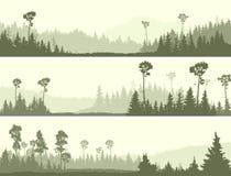 Insegne orizzontali di legno di conifere selvaggio con la radura illustrazione vettoriale
