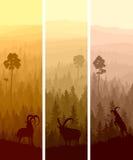 Insegne verticali del legno di conifere delle colline. Fotografia Stock Libera da Diritti