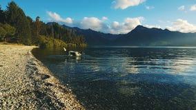 Insegua andare per una nuotata in un lago Immagine Stock Libera da Diritti
