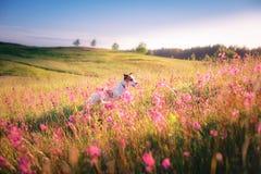 Insegua in fiori Jack Russell Terrier Immagine Stock