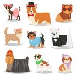 Insegua il carattere del cagnolino dell'animale domestico del cucciolo di vettore in abbigliamento canino dell'insieme doggish de illustrazione di stock