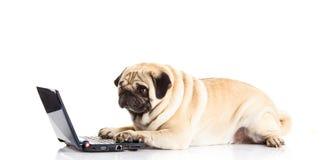 Insegua il computer del cane del carlino sulla tecnologia moderna del computer portatile bianco del fondo Fotografia Stock