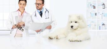 Insegua il consiglio veterinario dei veterinari dell'esame gli esami ed il PR fotografia stock
