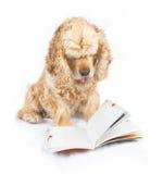 Insegua il libro di lettura, con la punta della linguetta fuori Immagini Stock Libere da Diritti