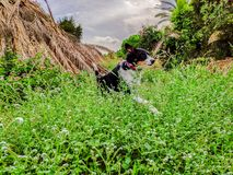 Insegua il salto in natura e godere dell'esercizio fotografie stock