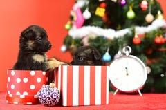 Insegua l'anno, l'animale domestico e l'animale su fondo rosso fotografie stock libere da diritti