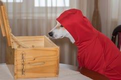 Insegua l'indumento nuovo d'uso che esamina la scatola di legno aperta misteriosa immagini stock