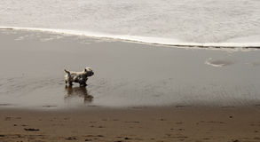 Insegua la passeggiata dalla spiaggia Immagini Stock Libere da Diritti