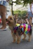 Insegua nei colori luminosi Rio Animal Carnival Fotografia Stock Libera da Diritti