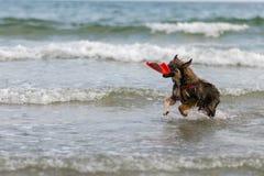 Insegua una nuotata il mare allegro, Fotografia Stock