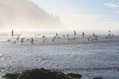 Inseguimento degli uccelli Fotografie Stock Libere da Diritti