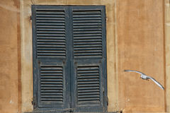 Inseguimento del gabbiano in portofino Fotografia Stock Libera da Diritti