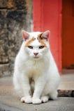 Inseguimento del gatto Fotografia Stock