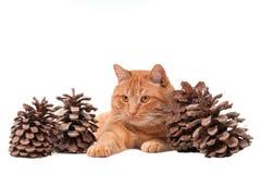 Inseguimento del gatto Fotografie Stock Libere da Diritti