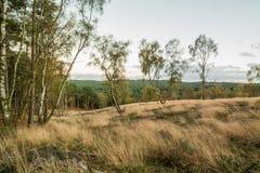 Inseguimento Forest In Autumn di Cannock Fotografia Stock