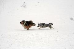 Inseguimento su neve Fotografie Stock