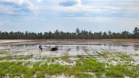 Inseguitore locale di uso dell'agricoltore per coltivare il riso con il fondo del cielo blu Fotografia Stock Libera da Diritti