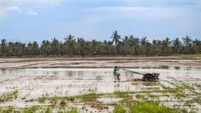 Inseguitore locale di uso dell'agricoltore per coltivare il riso con il fondo del cielo blu Immagine Stock Libera da Diritti