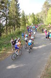 Inseguitrices climbing. The group of inseguitrices cyclists is climbing the first kilometers of the Zoncolan mountain steep slopes during the last Giro d'Italia Royalty Free Stock Images