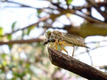 Insektów drapieżniki fotografia royalty free