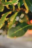 Insektów jajka Zdjęcia Royalty Free