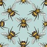 Insekt ścigi bezszwowy wzór, tło z grawerującym zwierzęca ręka rysującym stylem royalty ilustracja