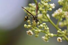 insekt żerdź na kwiatach i liściach obrazy royalty free