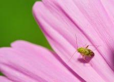 Insekt Lizenzfreie Stockbilder