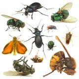 insekt Fotografia Royalty Free