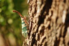 insekt Obrazy Stock