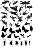 Insekt vektor abbildung