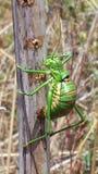 insekt Zdjęcie Stock