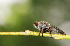 Insekt Stockbild
