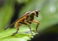 insekt obraz royalty free