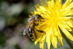 insekt lizenzfreie stockfotografie