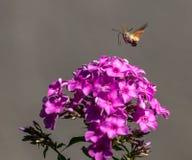 insekt Lizenzfreies Stockfoto