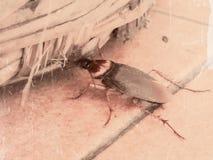 insekt Obraz Stock