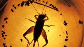 Insekt analiza zbiory