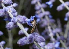 Insekt auf Anlage lizenzfreie stockbilder