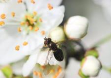 Insekt auf Blüte Lizenzfreies Stockfoto