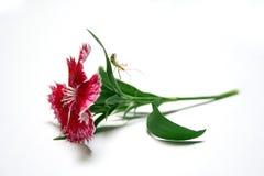 Insekt auf Blume lizenzfreie stockfotos