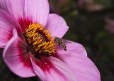 Insekt auf Blume stockfoto