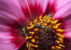 Insekt auf Blume stockfotos
