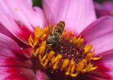 Insekt auf Blume lizenzfreies stockbild
