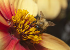 Insekt auf Blume stockbilder