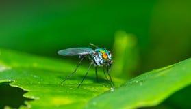 Insekt auf dem Blatt Lizenzfreies Stockbild