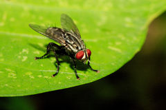Insekt auf dem Blatt Stockfotografie