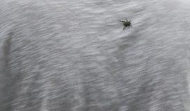 Insekt auf dem T-Shirt Stockfotografie