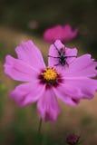 Insekt auf der Blume Stockbild
